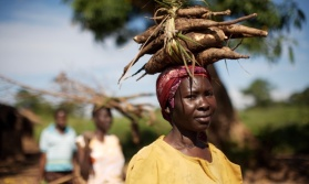 Edith Acengo (42) carries Cassava back to the IDP camp where she lives. Photo by Dan Chung for the Guardian